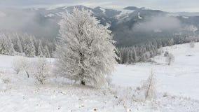 Flyga runt om ett djupfryst mycket härligt träd Vintersaga Landskap som ska beundras stock video