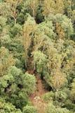 Flygbild av en campingplats bland gröna träd Royaltyfria Bilder