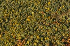 Flygbild av en skog Royaltyfri Fotografi