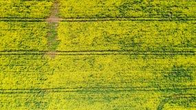 Flygbild av rapsfröblommor, Frankrike arkivfoton
