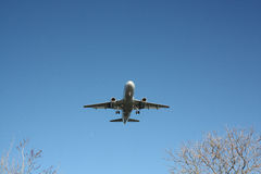 Flygbolagpassagerarenivå som kommer in över träd Arkivbild