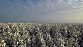 Flyget över vinterpinjeskogsnö faller från träden molnig sky stock video