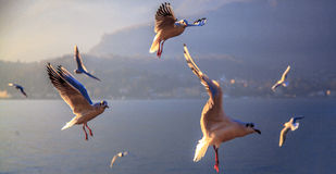 Flyget Royaltyfria Bilder