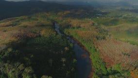 Flyget för surret för solnedgången för djungler för nationalparken för LAN för den tropiska thailändska cheoen gömma i handflatan stock video