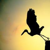 Flygfågel för fågels liv i soluppgång Arkivbilder