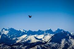 Flygfågel i bergen Royaltyfri Foto