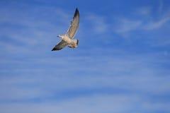 Flygfågel i himmel Arkivbild