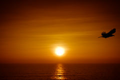 Flygfågel och Goa, Indien solnedgång Royaltyfri Foto