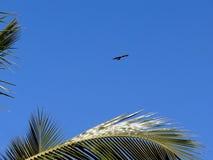Flygfågeln 2008 årliga gyckel för frenesi för april ståndsmässiga flygfrederick som har drakedrakar, parkerar folk sjunde sherand Royaltyfri Fotografi
