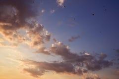 Flygfåglar i den färgrika himmelaftonhimlen arkivbild