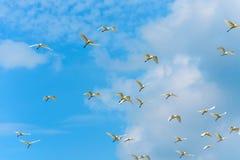Flygfåglar på blå himmel med moln Arkivbild