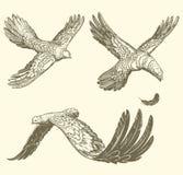 flygfåglar som är liknande till bokstäver tecknade kvinnor för framsidahandillustration s Retro gravyr för tappning Arkivbild
