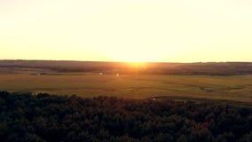 Flygfotografering av en pinjeskog på solnedgången Flyg över träden i barrskogen in mot solen lager videofilmer