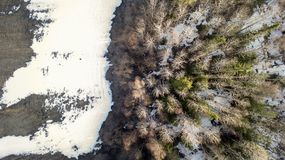 Flygfotografering av en skog i vinter arkivfoto