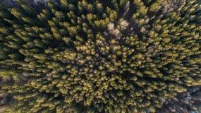 Flygfotografering av en skog i vinter royaltyfri fotografi