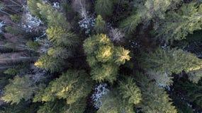 Flygfotografering av en skog i vinter arkivbild