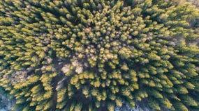 Flygfotografering av en skog i vinter royaltyfria bilder