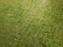 Flygfotografering av fältet för höbal i South Dakota jordbruk arkivfoton
