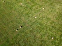 Flygfotografering av fältet för höbal i South Dakota jordbruk royaltyfri foto