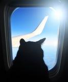 Flygkattflyg i ett flygplan som ut ser hyttventilen som förbiser vingen för blå himmel Fotografering för Bildbyråer