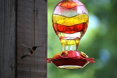 Flygkolibri Royaltyfria Bilder