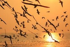 Flygkonturfågel Arkivbild
