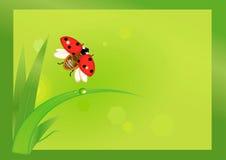 Flygnyckelpiga med gräs Royaltyfri Fotografi