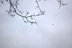 Flygplan som över flyger arkivfoto