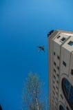 Flygplanet flyger över staden Arkivfoto