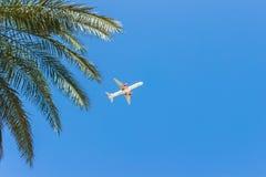 flygplanflyg över tropiska palmträd klar semestertid för blå himmel royaltyfri foto
