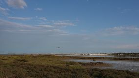 Flygplanflyg i blå himmel och landning i flygplats stock video