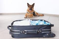 flygplatshund Arkivfoton