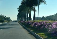 Flygplatsinställningsvägen med naturliga blommor - lagerföra fotoet Royaltyfri Fotografi