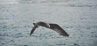 Flygseagull över havet Royaltyfri Foto