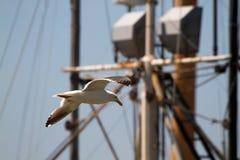 flygseagull Royaltyfri Bild