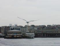 Flygseagull i en grå molnhimmel i Istanbul Royaltyfri Bild