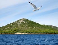 Flygseagull nära den Pasman ön croatia Royaltyfria Bilder