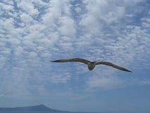 FlygSeagull ovanför molnig blå himmel royaltyfri foto