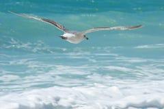 Flygseagull på bakgrunden av havet Arkivbild
