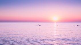 FlygSeagull på soluppgång på havet på bakgrunden av en fridsam havs- och resningsol royaltyfria bilder