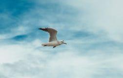 Flygseagull på stranden av Blackpool, sikt som blöter stranden och Royaltyfri Bild