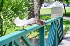 FlygSeagull på USF-universitetsområdet Arkivfoton