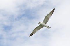 FlygSeagulls arkivfoton