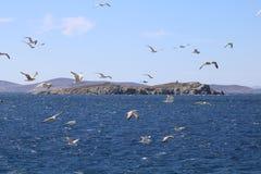 FlygSeagulls Arkivbild