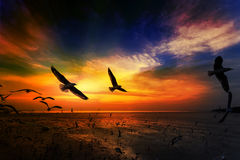 Flygseagulls i solnedgång Arkivbilder