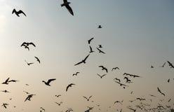 FlygSeagulls near mangroven Forest Natural Royaltyfria Bilder
