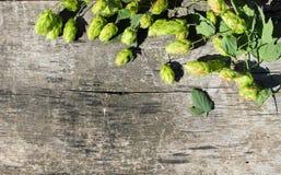 Flygturkottar på träbakgrund Royaltyfri Bild