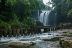 Flygvattenfall i bambuskog av bambuhavsområde in Fotografering för Bildbyråer