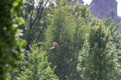 Flygvråk för gröna träd Fotografering för Bildbyråer
