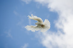 Flying Royalty Free Stock Images